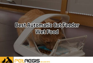 Best Automatic Cat feeder wet Food