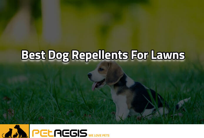 Best Dog Repellents for Lawns