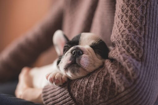Dog Sleeping in female arms