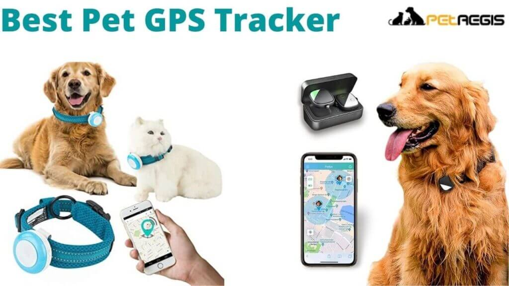 Best Pet GPS Tracker no Monthly Fee