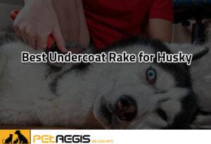 Best-Undercoat-Rake-for-Husky