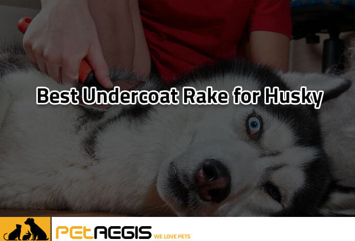 Best-Undercoat-Rake-for-Husky