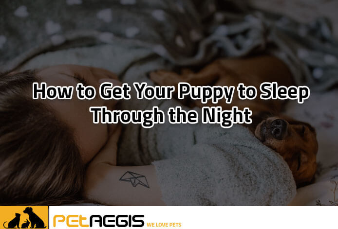 How to Get Your Puppy to Sleep Through the Night