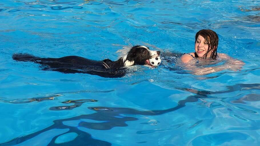 How to Make Swimming an Enjoyable Experience for Your Dog
