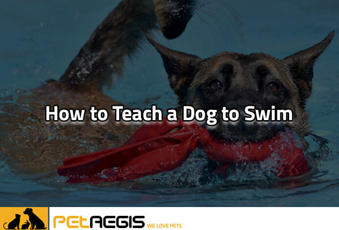 How to Teach a Dog to Swim