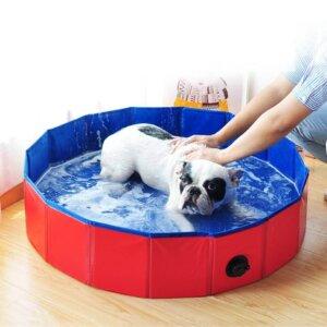 How to Teach a Dog to Swim in a Bathtub