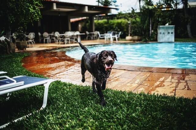 Swimming Benefit Your Dog