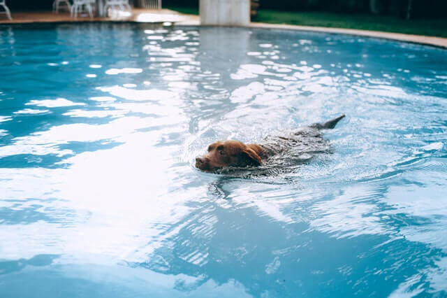 how to teach a dog to swim