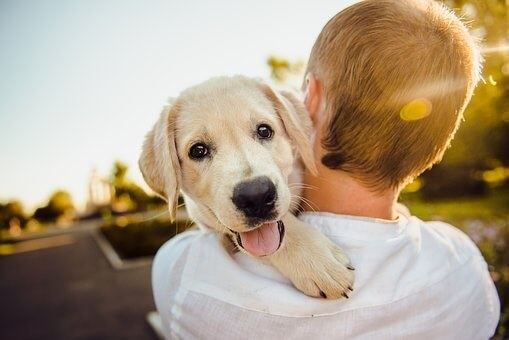How to stop your puppy from biting