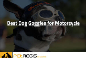 Best Dog Goggles for Motorcycle