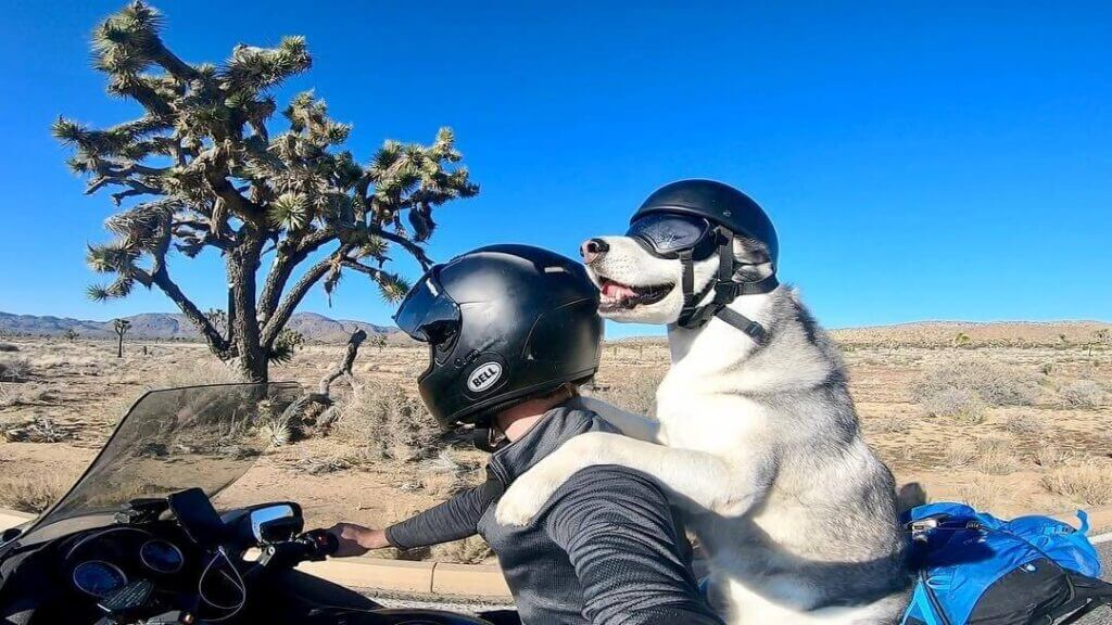 Best Motorcycle Helmet for Dogs