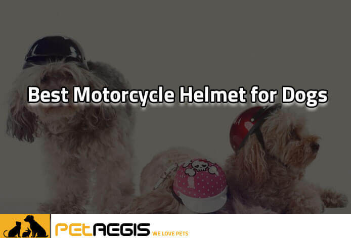Best-Motorcycle-Helmet-for-Dogs