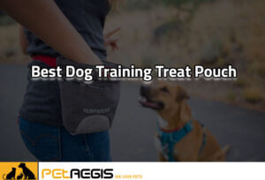 Best dog training treat Pouch
