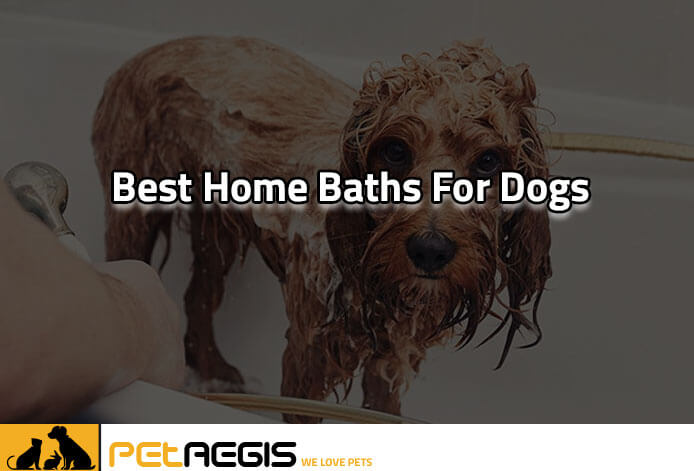 Best Home Baths for Dogs
