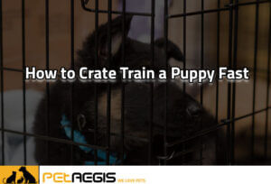 How to crate train a puppy fast