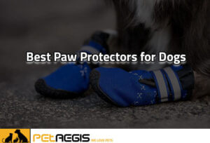 Best-Paw-Protectors-for-Dogs-in-2020PA-3
