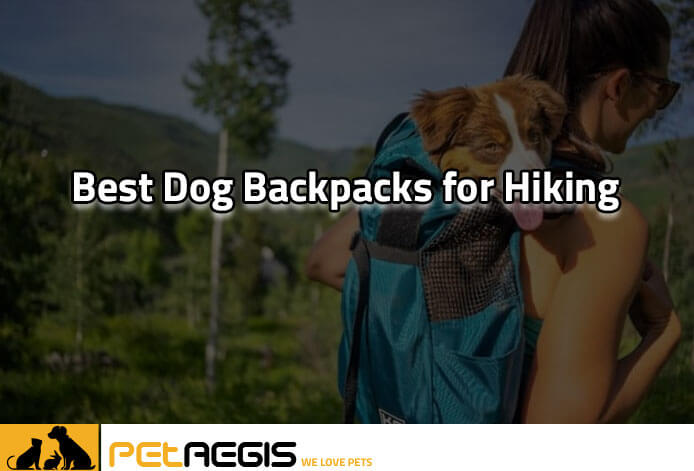 Best Dog Backpacks for Hiking PA 2
