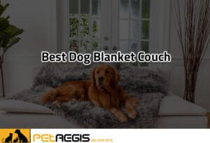 Best-Dog-Blanket-Couch