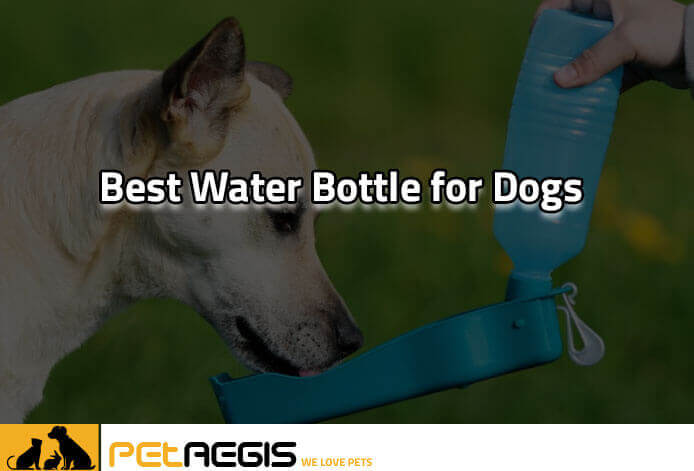 Best water bottle for Dogs PA 2