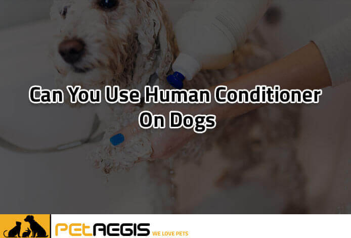 Can You Use Human Conditioner on Dogs