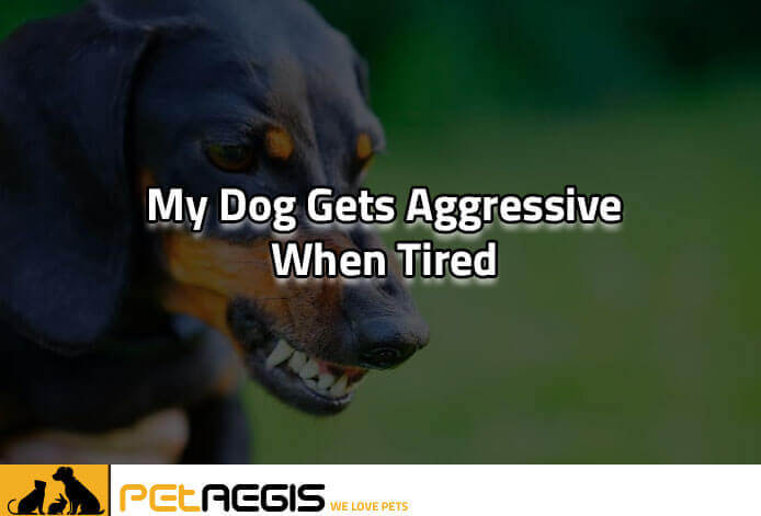 Why Does My Dog gets Aggressive When Tired