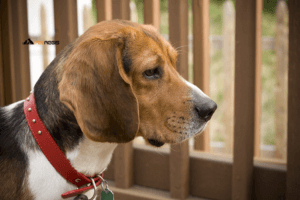 Best GPS for Dogs