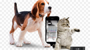 kisspng cat dog gps navigation systems gps tracking unit t technological sense runner 5b4998263f6c66.7285066515315497342598