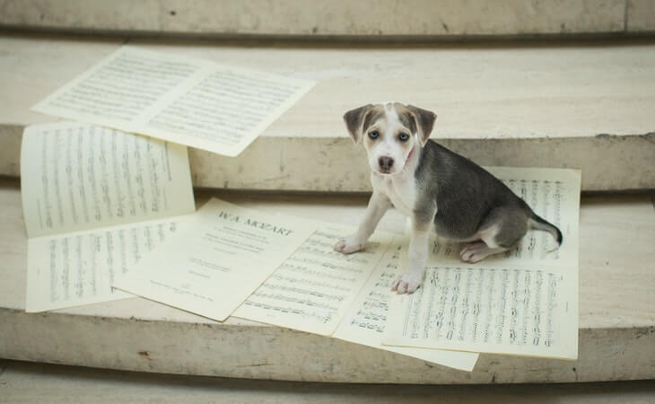 10 Puppy Facts You May Not Know