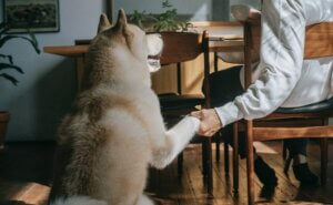 How To Teach A Dog To Give Paw