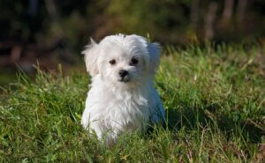 how-to-teach-your-puppy-his-name-6-tips