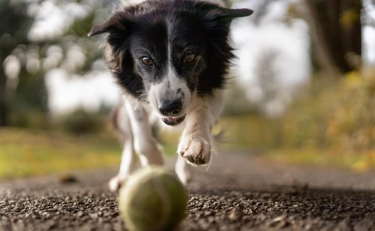 how-to-train-your-dog-to-sit-methods-i-used