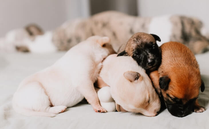 Picking The Right Pup